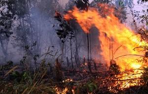 Api berkobar membakar lahan warga di Kota Dumai, Riau, Senin (3/3). Kebakaran lahan dan hutan yang terus terjadi di Riau, kini telah mencapai luas sekitar 7.972 hektare dan asapnya mulai mencapai Singapura. ANTARA FOTO/FB Anggoro/ed/Spt/14.